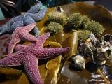 10.на морской прогулке — дары океана